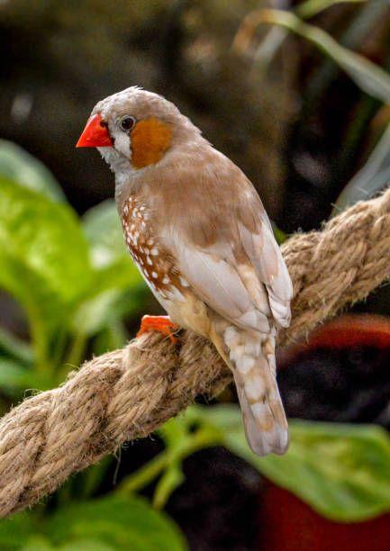 Finch stock photo. bird nature wildlife photography