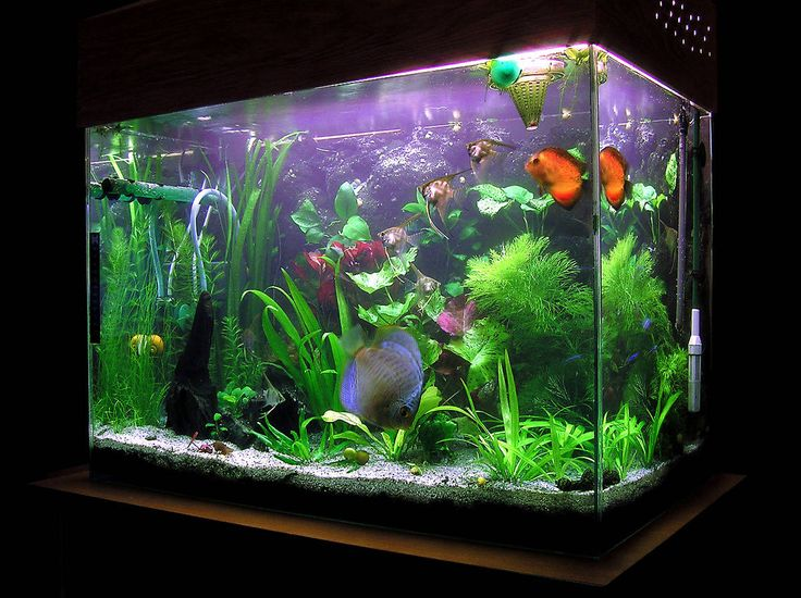 Awesome Fish Tank Decoration Design ~ http://www.lookmyhomes.com/amazing-fish-tank-decoration/