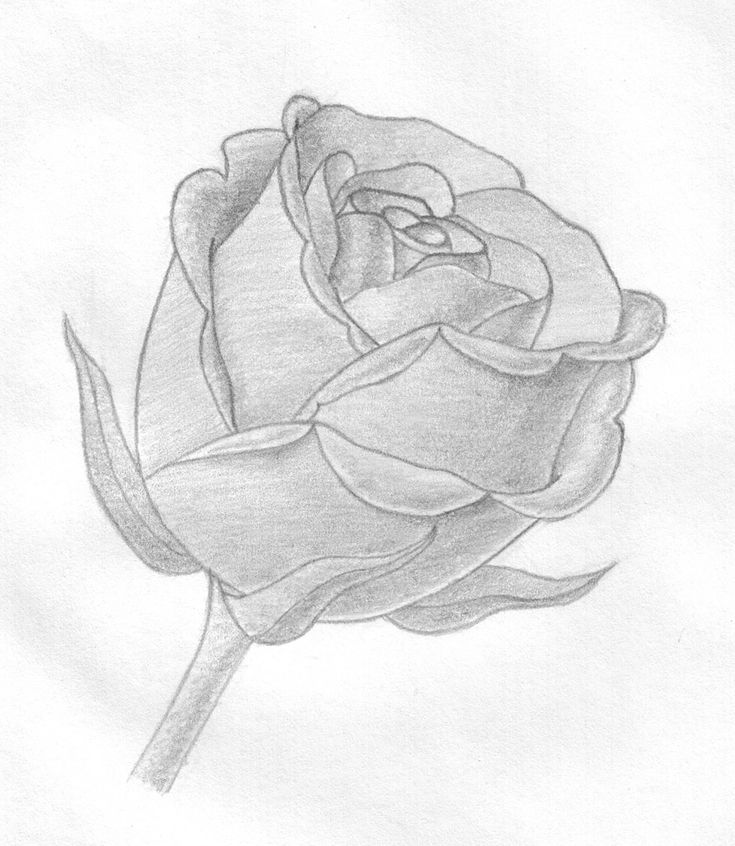 Розы картинки нарисованные красивые