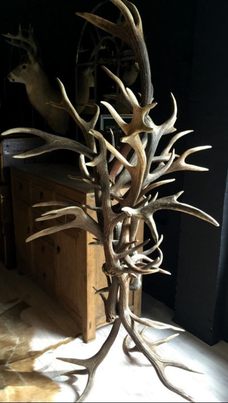 29 Best Antler Items Gewei Artikelen Images On Pinterest