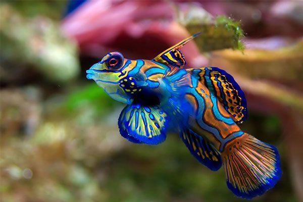 Tengeri akvárium vs. édesvízi akvárium