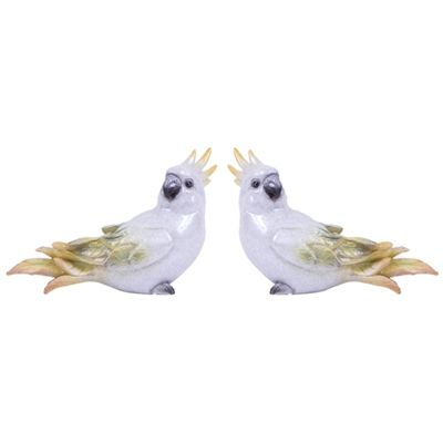 Trevisan ♥ Pássaro Calopsita Branca Tropical P conjunto