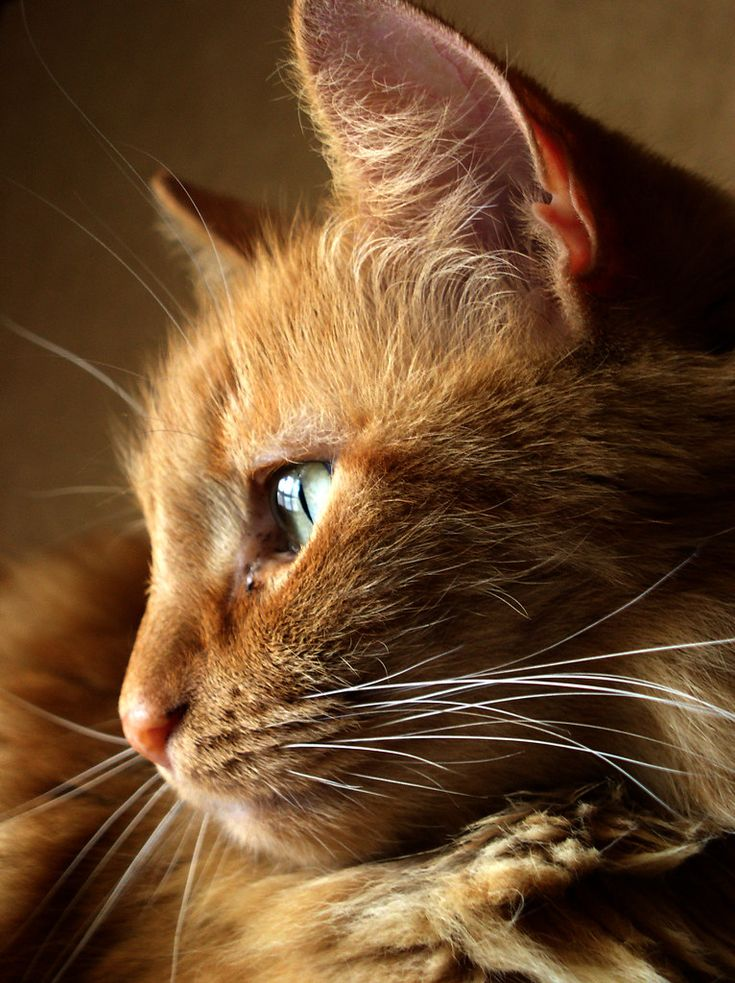 Pensive Orange tabby cats, Cats, Pretty cats