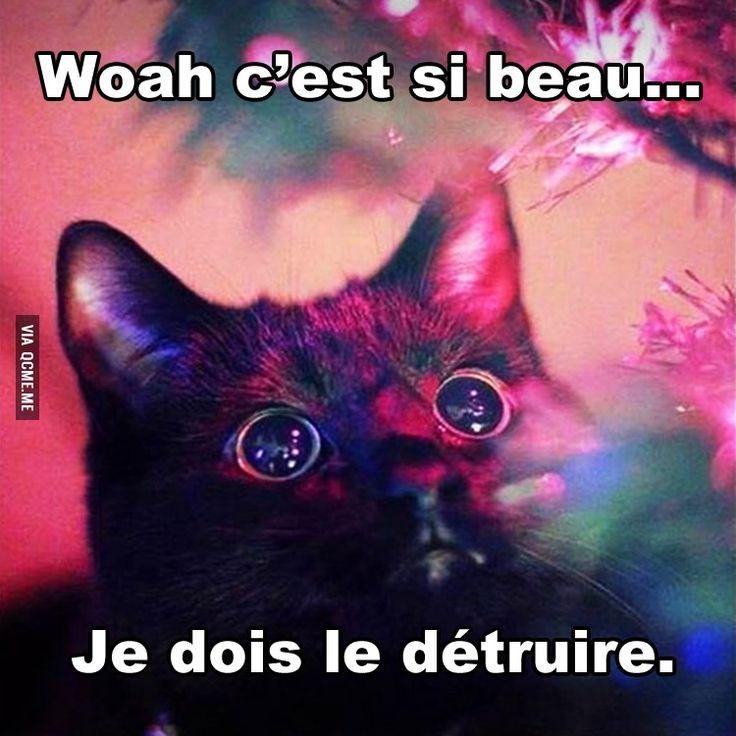 Logique des chats – Québec Meme +
