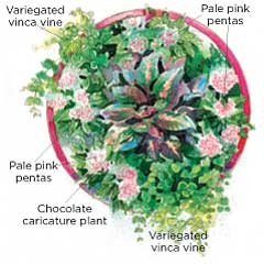 Recipes for Planting Containers