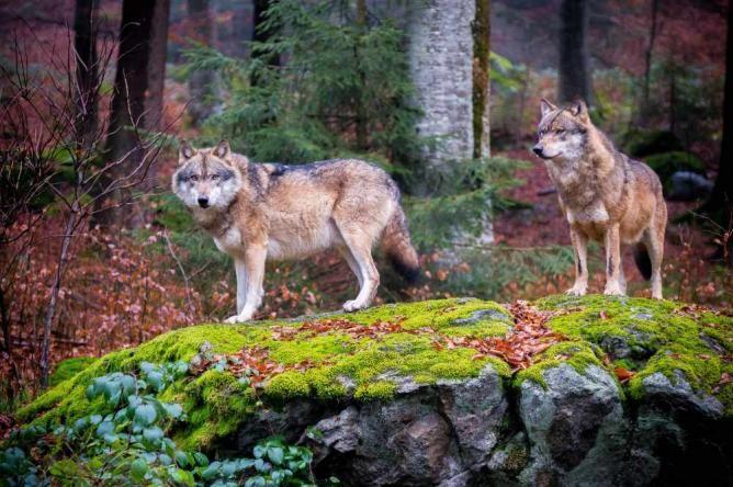 Národný park Bavorský les, Nemecko ,