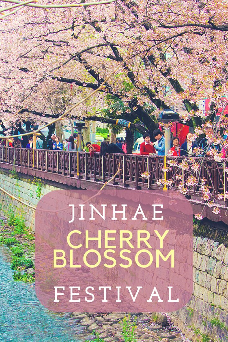 The Jinhae Cherry Blossom Festival in South Korea was MAGICAL! So many beautiful cherry blossoms.