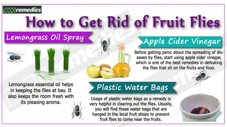 are dry fruits healthy how to get rid of fruit flies fast