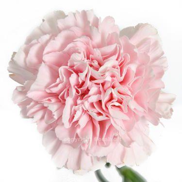 17 best images about danielle m 39 s wedding on pinterest disney weddings babies breath bouquet. Black Bedroom Furniture Sets. Home Design Ideas