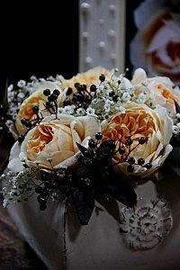Rose Jayne Austin  Gypsophile paniculata  Lysimaque Firecracker  Sambucus Black Beauty