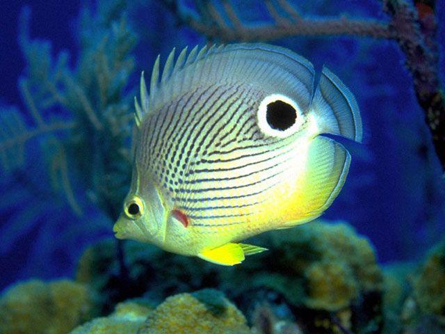 Free Fish Aquarium Screensaver Download - Free Marine Aquarium ...