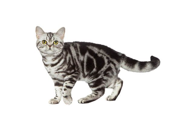 Use Purina's Cat Breed Selector to find the best cat breed for you and your…