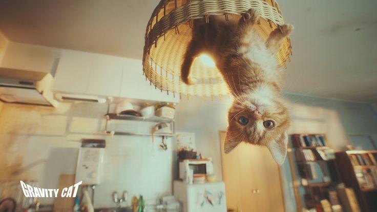 CATS.  we just love cats. #重力猫『GRAVITY CAT / 重力的眩暈子猫編』presented by GRAVITY DAZE 2