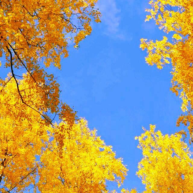 Herbst in Lappeenranta