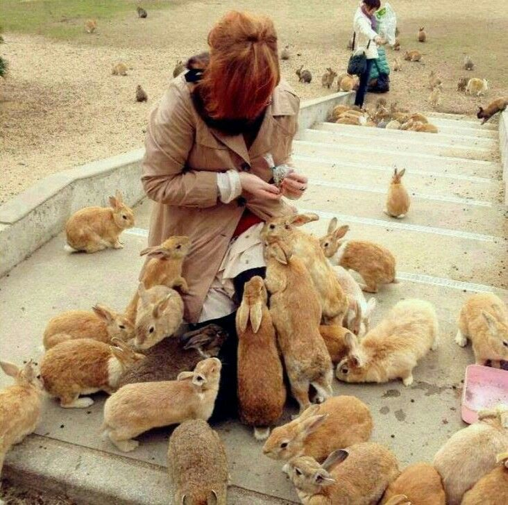 There is an Island in Japan called Usagi Jima, A.K.A. rabbit Island. The island is overrun with wild feral rabbits who are quite used to humans due to all of the handling and feeding of the rabbits.