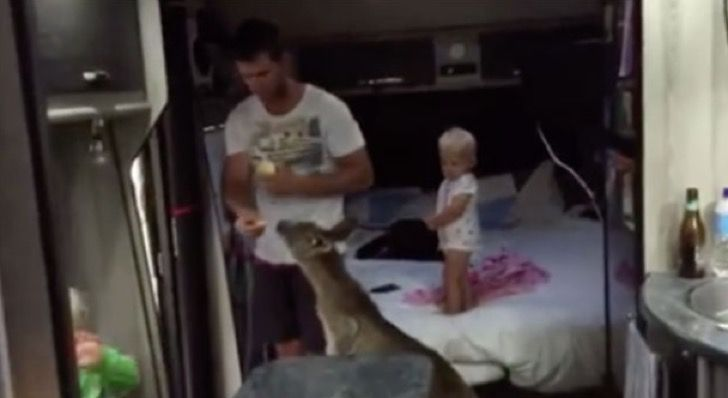 Un papá alimentó a un canguro en su casa rodante. Horas más tarde siente los pasos de una multitud