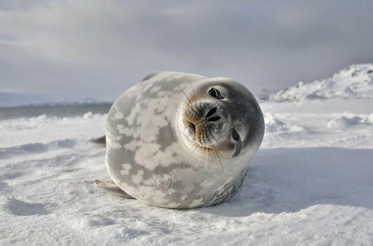 AnormaL STYLE: Życie na Antarktyce