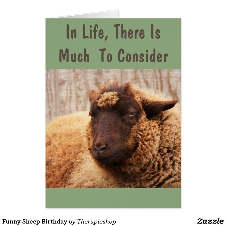 Funny Sheep Birthday