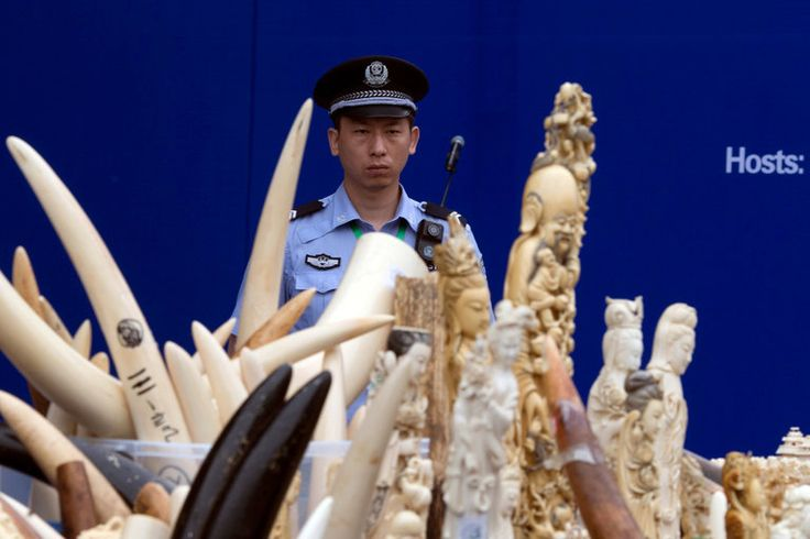 China's decision gives wildlife protection advocates hope that the threatened extinction of certain elephant populations in Africa can be averted.