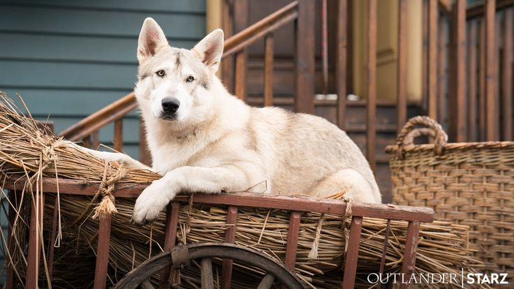 New 'Outlander' Official Photo of Rollo for Season Four | Outlander TV News