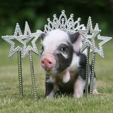 Her royal pigness