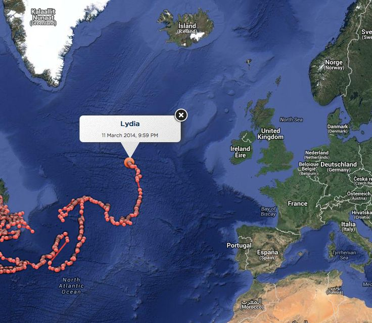 Suivez la traversée de l'Atlantique de Lydia, le requin blanc qui a battu le record de Nicole | Slate.fr
