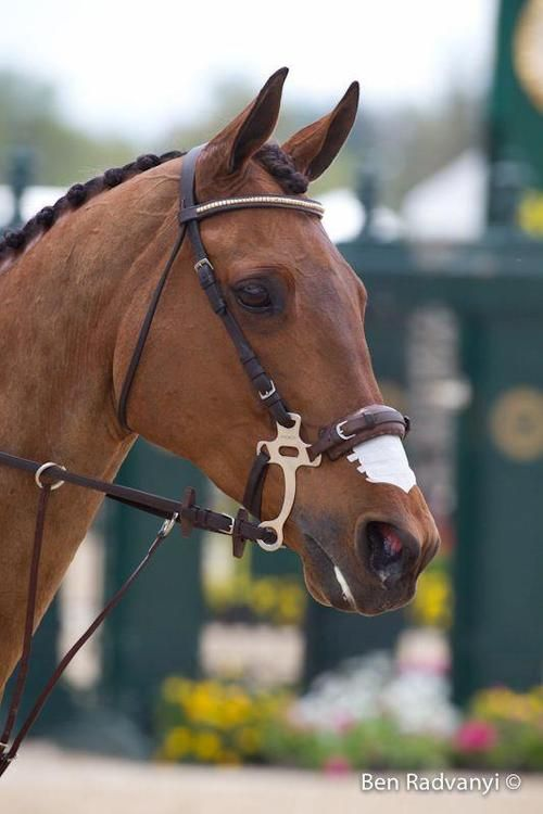 How to Fit a Hackamore | Animals - mom.me
