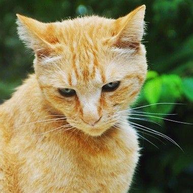 Pubblica annunci animali in regalo su www.eannunci.com #gatti #gatto #gattini #gattidiinstagram #gattidiistagram #gattidiroma #animali #adozione #amore #adottami #adottata #adottanoncomprare #regali #regalidinatale #regalidicompleanno #regalidinataleinanticipo