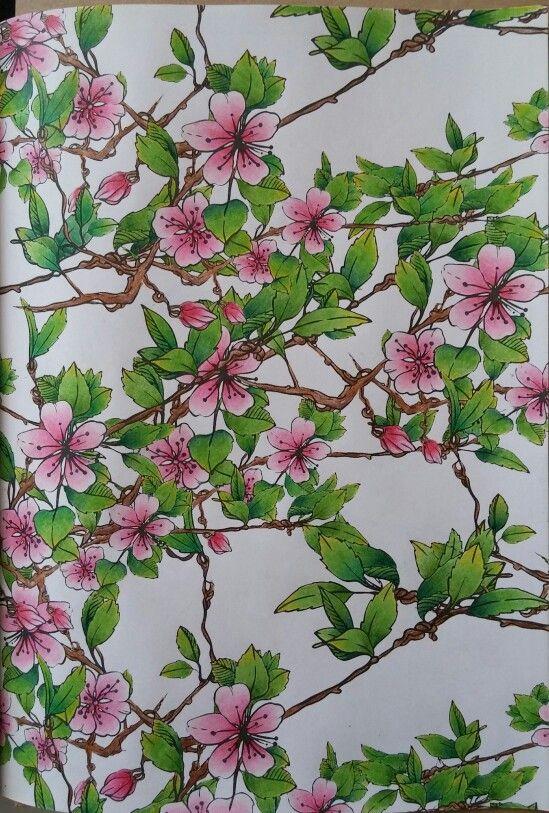 Cherry blossom, wiśnia japońska