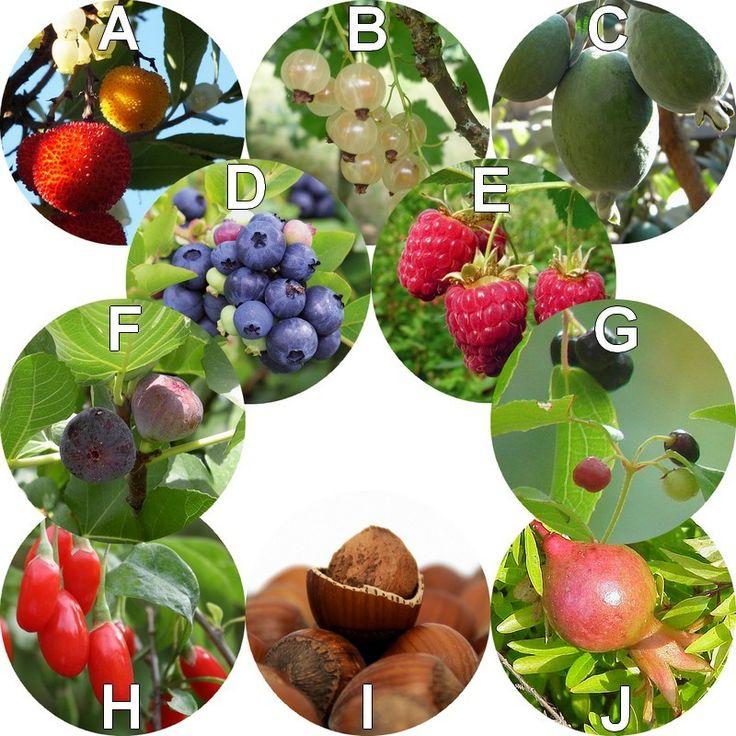 Haie fruitière à fruits comestibles