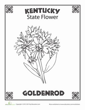12 best social studies state unit images on pinterest for Kentucky state flower coloring page