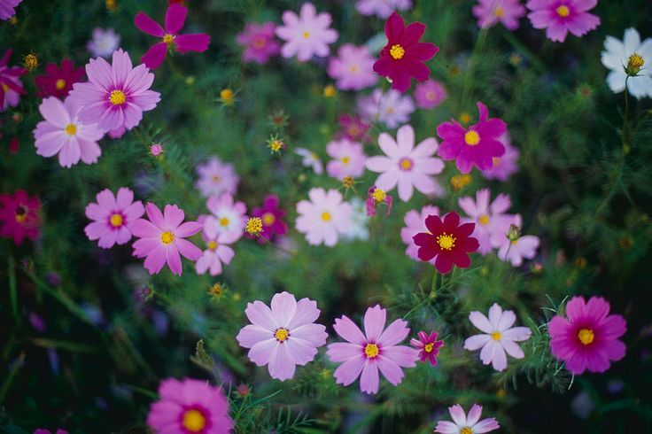 Bright and colorful garden flowers