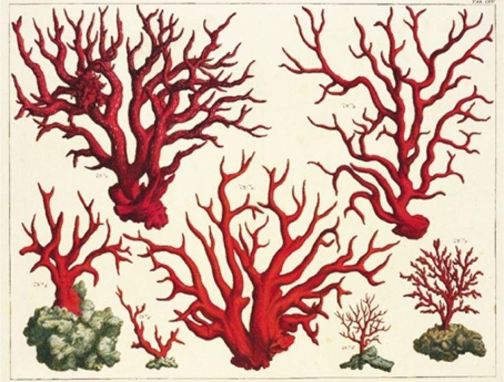Cabinet Of Natural Curiosities   Le Cabinet des curiosités naturelles dAlbertus Seba. Livres TASCHEN ...