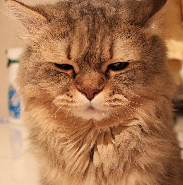 Gato mal humorado!!!