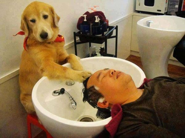 145 best kennelsgrooming images on pinterest pet health dog washing mans hair salon no idea doing animal funny pics pictures pic picture image photo images photos lol solutioingenieria Image collections