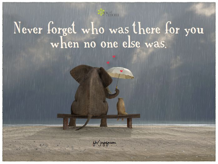 Never forget who was there for you when no one else was. <3 More beautiful, inspirational quotes on Joy of Mom! <3 https://www.facebook.com/joyofmom  #supportquotes #quotes #love #family #friends #joyofmom: Thoughts, Elephants, Life Lessons, True Words, Friendship Quotes, Favorite Quotes, Living, Inspiration Quotes, Sweet Messages