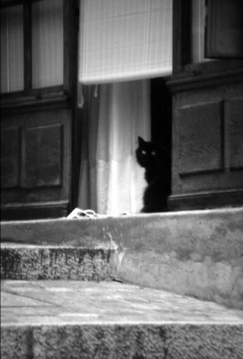 Black cat by Giuseppe Romanazzi - Little alley in Annecy, Savoie, France