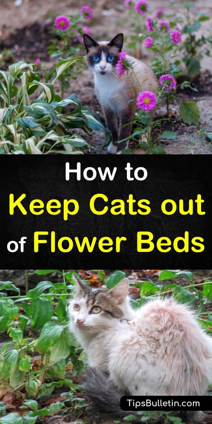 7 Clever Ways To Keep Cats Out Of Flower Beds Cat Repellant Outdoor Flower Beds Cats