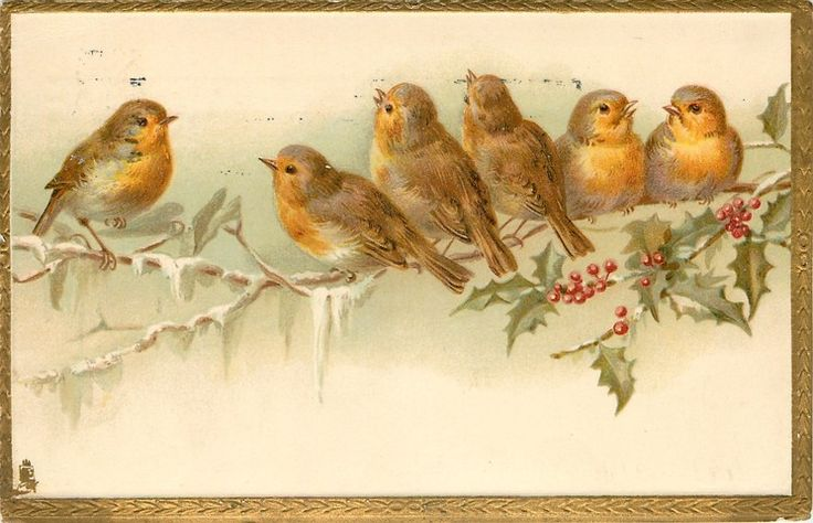 Postcard ~ Robins on a snowy branch, with holly, 1908.