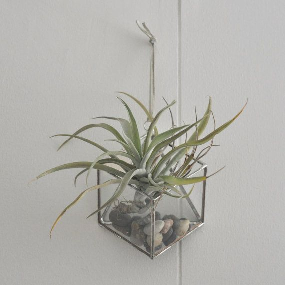 NEW Murus Terrarium, small -- for air plant terrarium or succulent -- stained glass -- terrarium supplies -- eco friendly