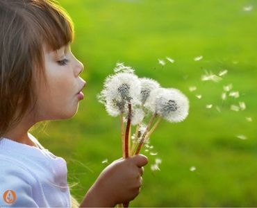 Tips & Hints for Easing Spring Hayfever -  Hear are some simple tips to make your spring and summer more joyous and less, well, less irritating!