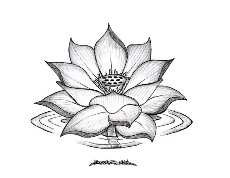 lotus flower drawing - Google Search