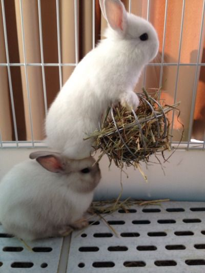 Small creatures like bunnies often rely on teamwork to help them out of sticky situations. Here we have two bunnies working together to escape the cage that their owner's so rudely put them in.