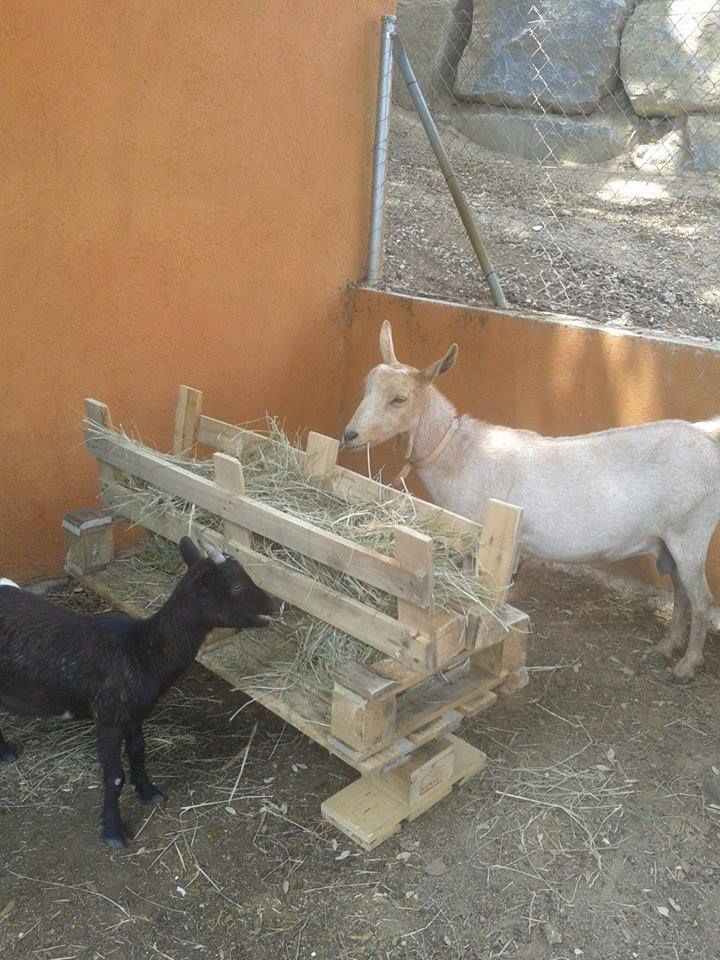 Pallet hay feeder...I would put a hinged top to keep the goats out of it