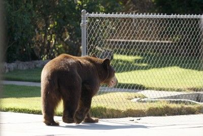 Black bear attacks man, his dog in front yard of Florida home