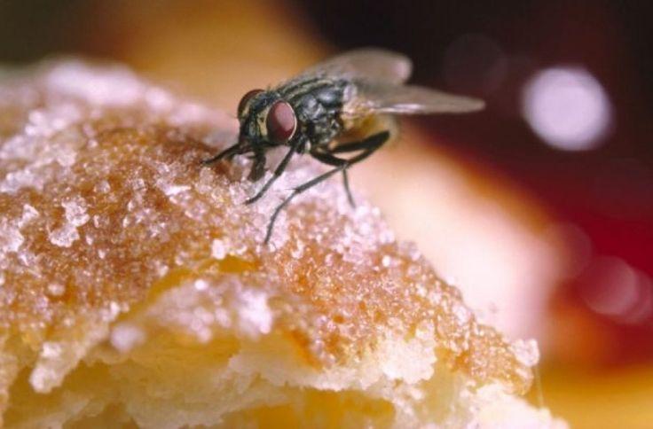 Το «μαγικό» για να μην πλησιάζουν μύγες στο φαγητό σας