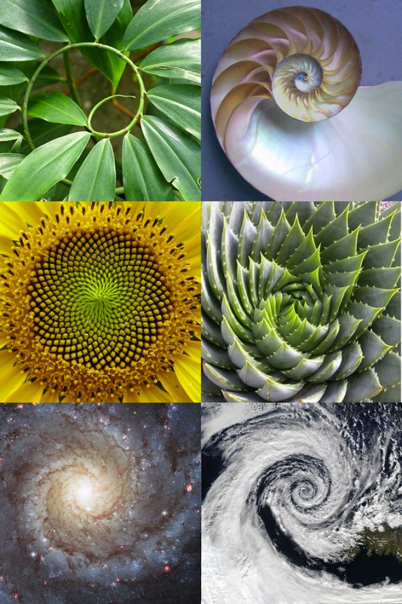 Fibonacci sequence. -flower of life.  - Great tools for light-workers.. Flower of Life T-Shirts, V-necks, Sweaters, Hoodies  More ONLY 13$ EACH! LIMITED TIME CLICK ON THE PIC