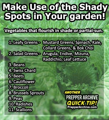 shade tolerant vegetables perfect for our apartment gardening man