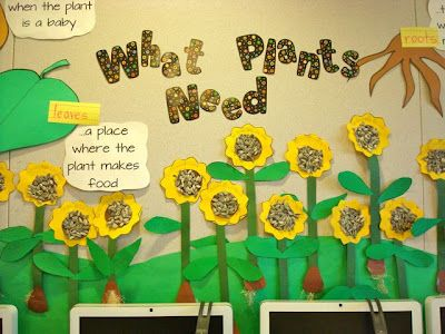 Bulletin board idea to use with how to grow a plant/labeling parts of a plant/what a plant needs to grow