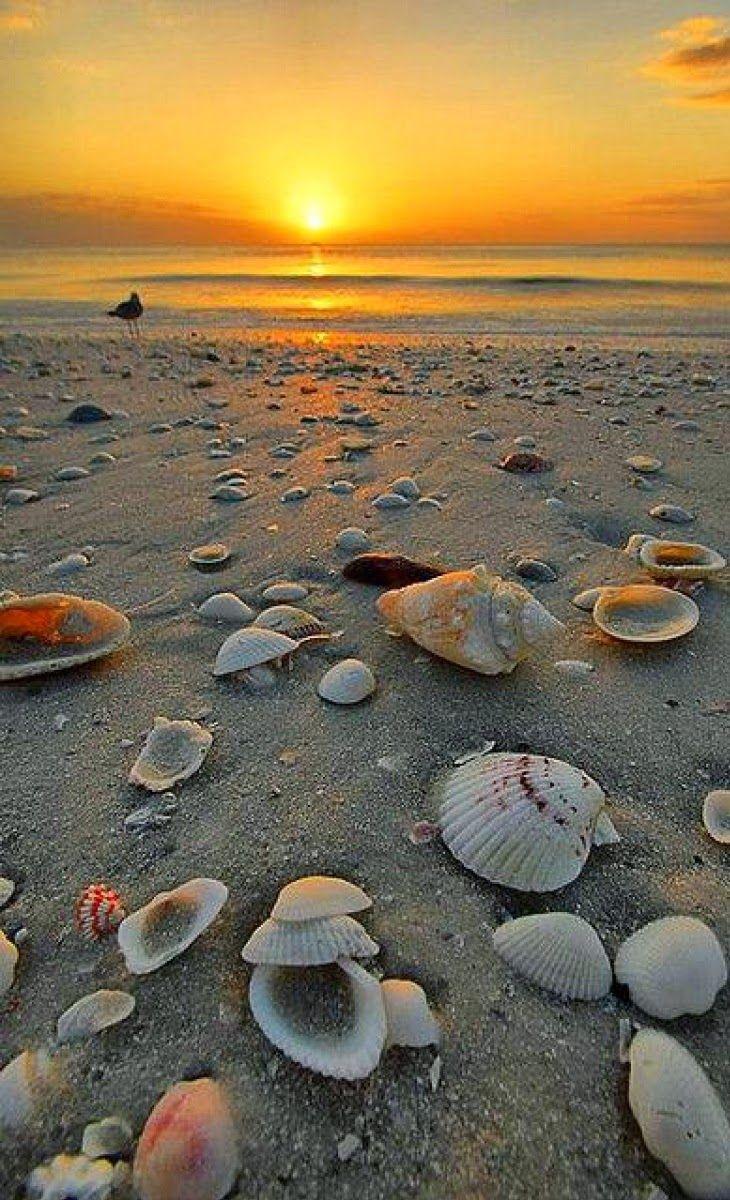 Marco Island Beach, Florida.